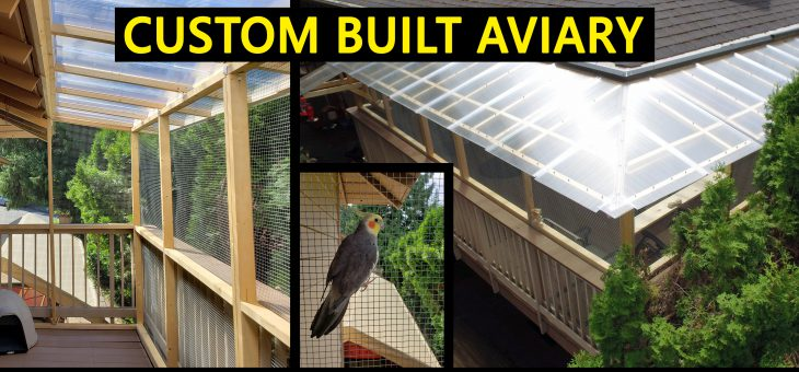 Custom built Aviary